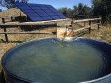 Bombagem de Água - Fonte: NREL