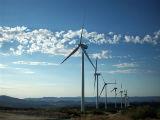 Gigantes da web querem renováveis